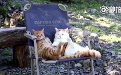 不如这两只猫咪