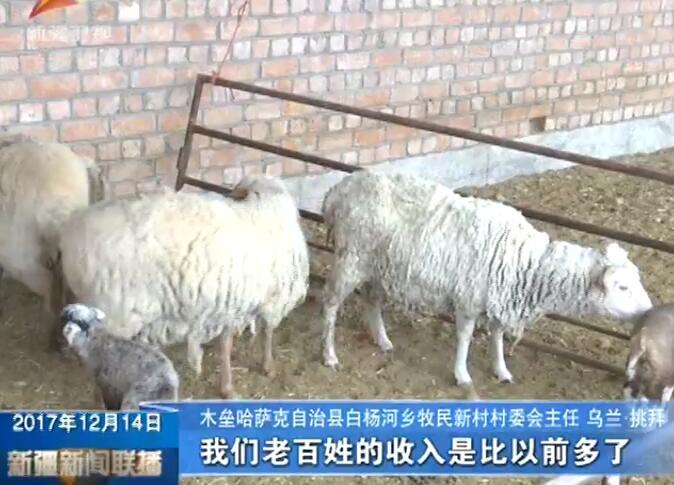 新疆优质牛羊数量全国领先