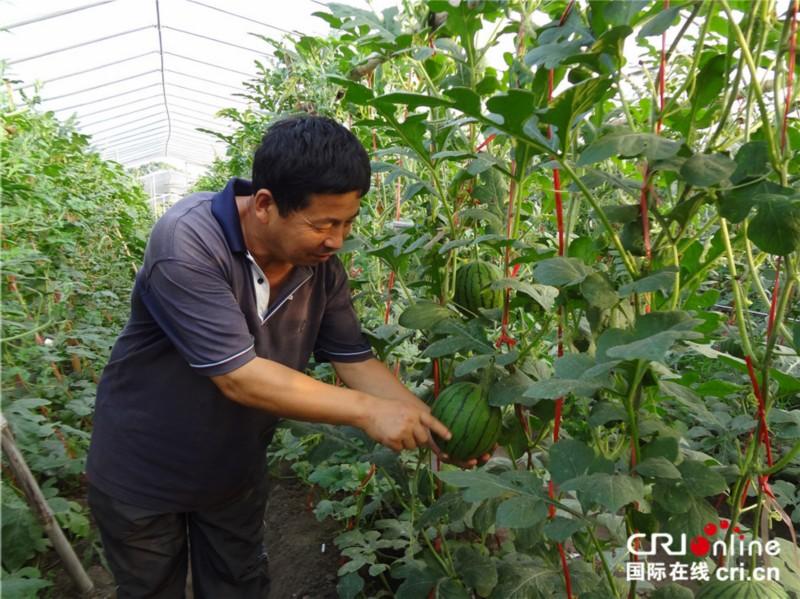 """mg电子游戏娱乐城:中国热带农业专家与刚果人民的""""西瓜情谊"""""""