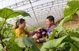河北打造华北错季蔬菜供应基地