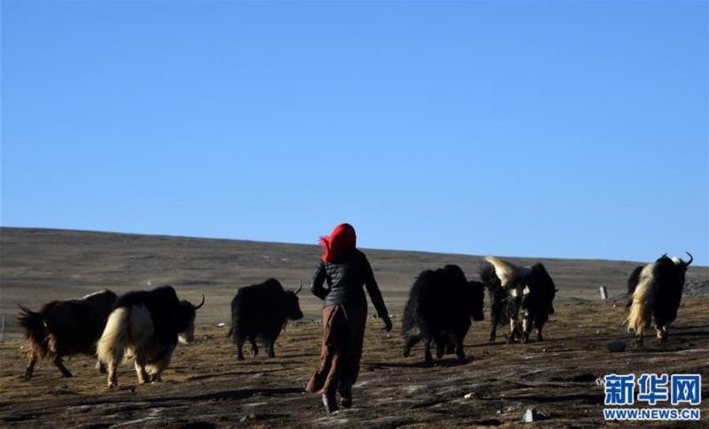 """98彩票网急速赛车:西藏""""乞丐村""""的小康之路"""