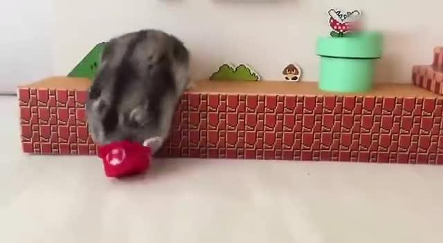给家里小仓鼠打造的马里奥闯关游戏