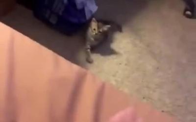猫咪你过来