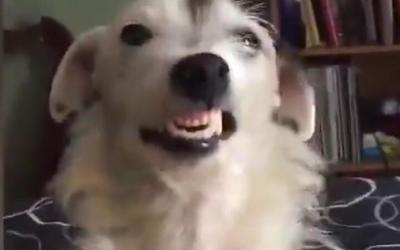 爱笑的狗运气不太差