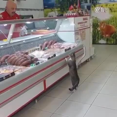 爱吃霸王餐的喵喵