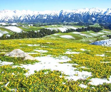 新源县那拉提草原雪后风光美如画