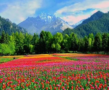 香醉天山 乌苏佛山国家森林公园美景如画