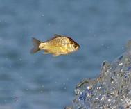 湖阔凭鱼跃