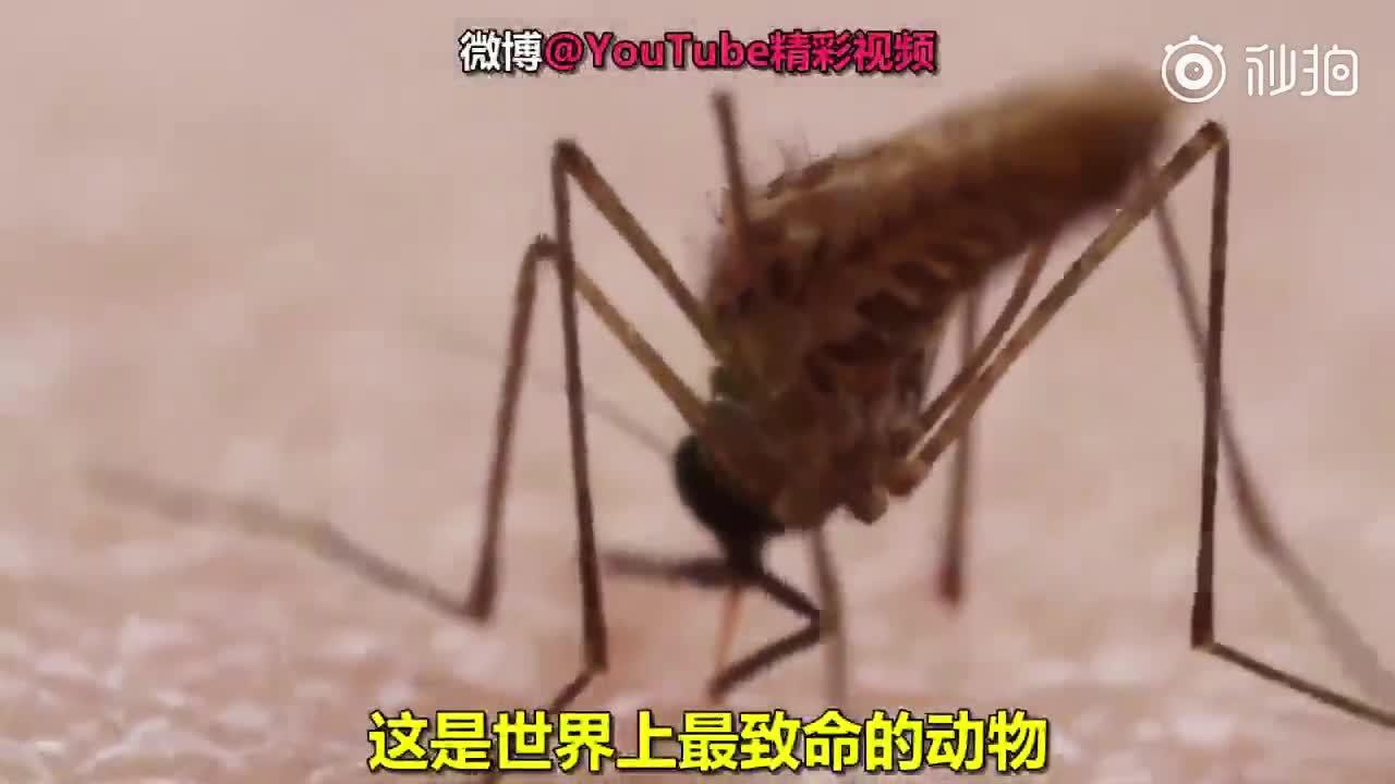 蚊子是如何吸血的