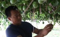 奋斗者《我在新疆种百香果》