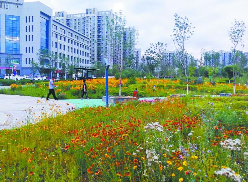 乌鲁木齐城市花卉40载变迁