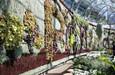 悉尼展出南半球最大植物墙