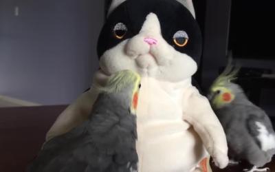 用玩具逗鹦鹉
