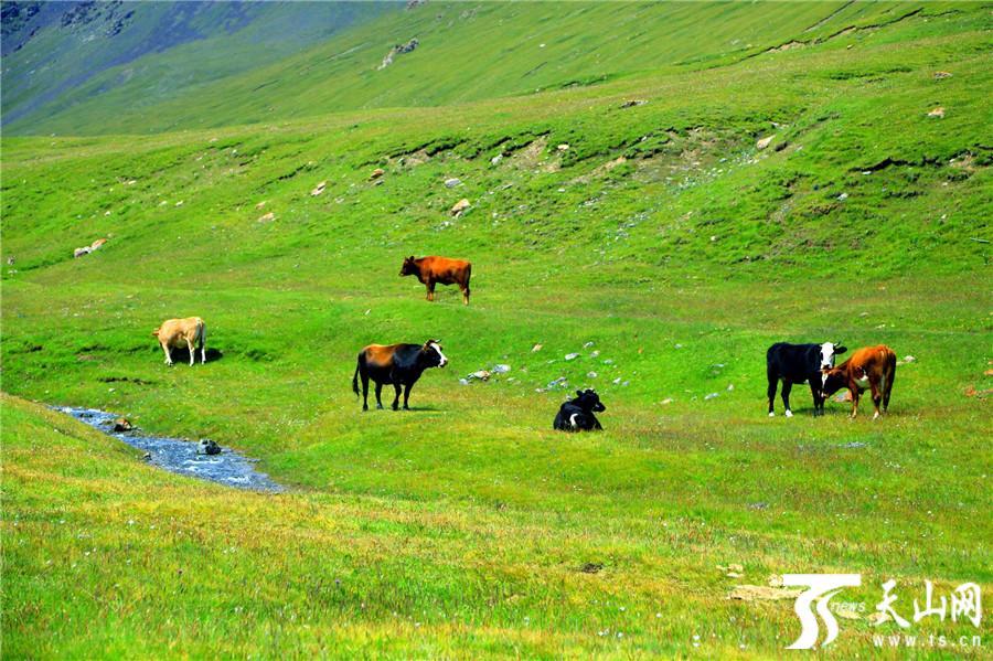 黑山草原处处是景