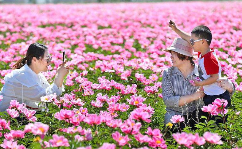 哈巴河县加依勒玛乡:特色种植+旅游开启增收新渠道