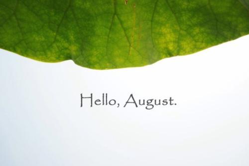 你好,八月