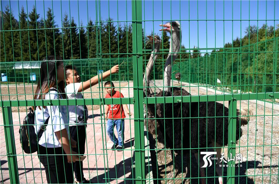 【疆遇风光】乌苏市佛山国家森林公园待普僧景区醉人风光吸引大批游客