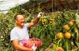 新疆特色产业助力农牧民致富
