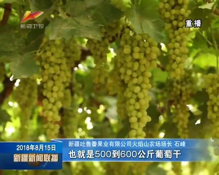 系列报道《果业问果》(下篇)做大做强林果产业链 叫响新疆品牌