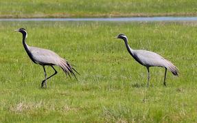 巴里坤草原湿地天蓝水清草绿 处处是生态美景
