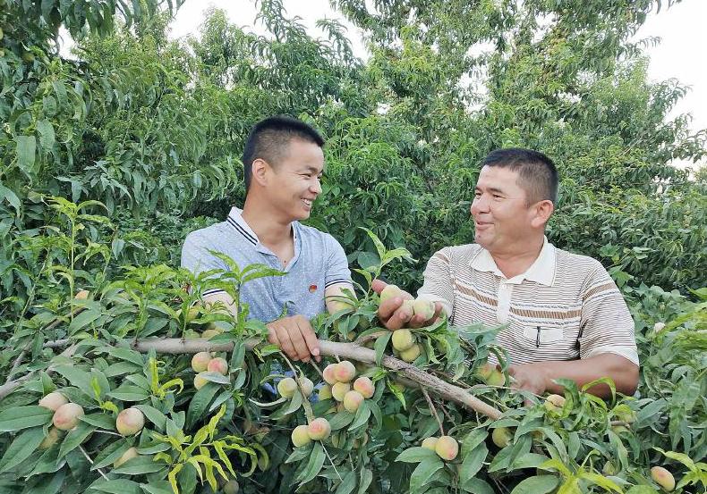 强根基 融多元 全产业链助乡村振兴