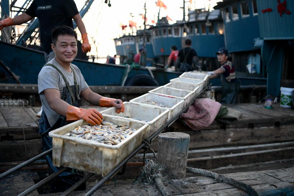 山东青岛:开海归来鱼满仓