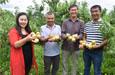 和静县:农家土桃子成致富
