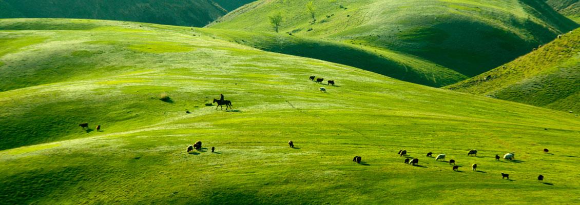 伊宁县托乎拉苏大草原的绝美春色