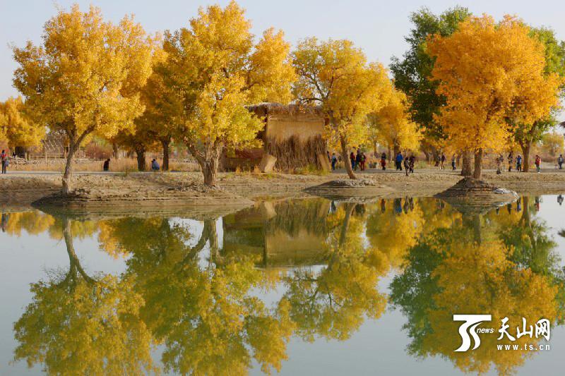 沙雅县胡杨节10月19日开幕 400余万亩原生态胡杨林迎八方客