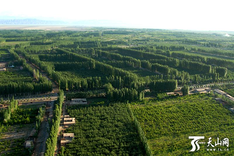 """柯柯牙,书写新疆版的""""塞罕坝""""荒漠绿化奇迹"""