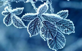 霜降,秋尽冬来