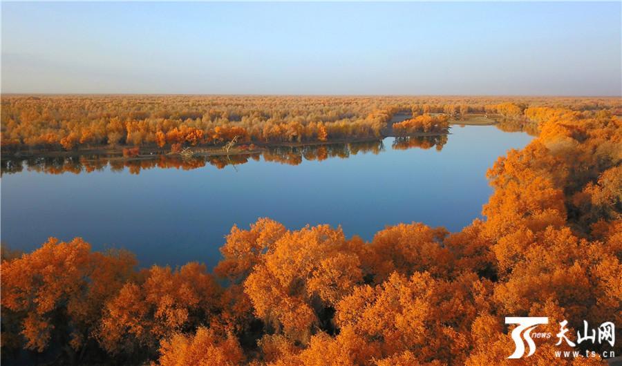 轮台县塔里木胡杨林公园壮美景色吸引游客