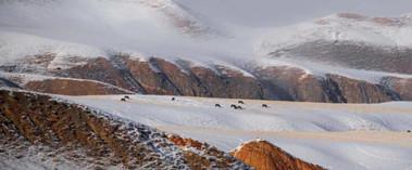 新疆雪后山川银装素裹