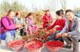 库车县:辣椒种植促增收