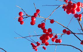福海县河滨公园里的缤纷秋色
