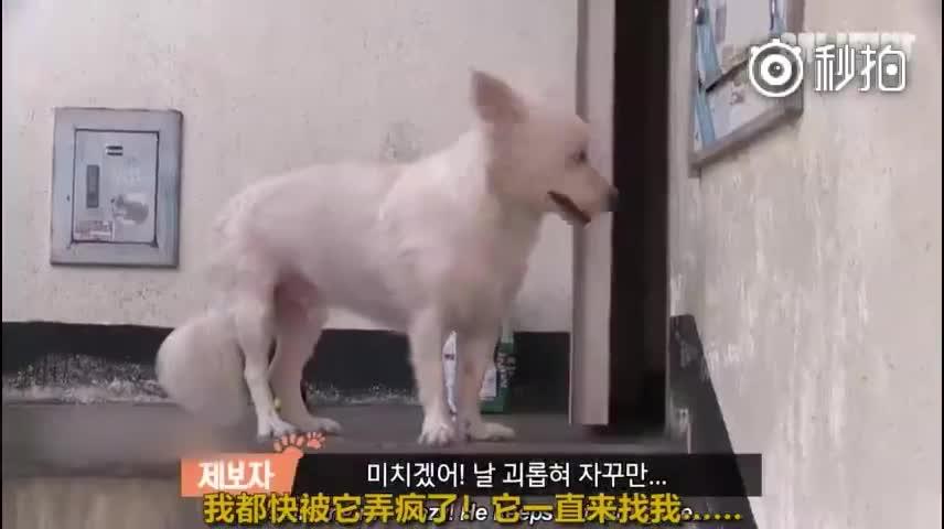 一只行为古怪的小狗狗