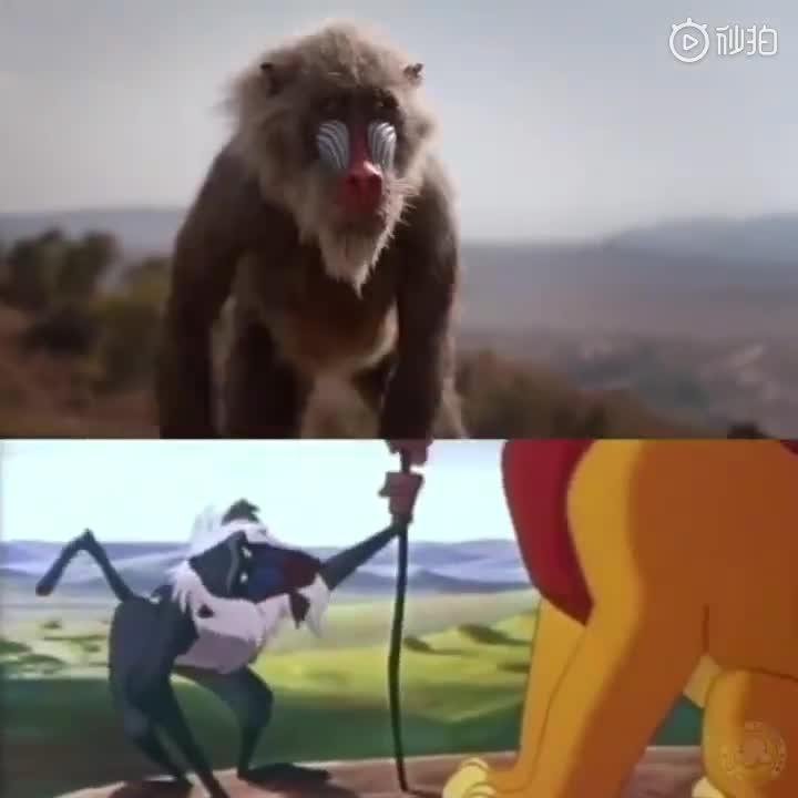 迪士尼真人版狮子王有多还原动画电影