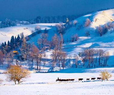 初冬那拉提展开雪原水墨画卷