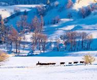 那拉提展开雪原水墨画卷