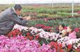 沙雅县:合作社助力脱贫