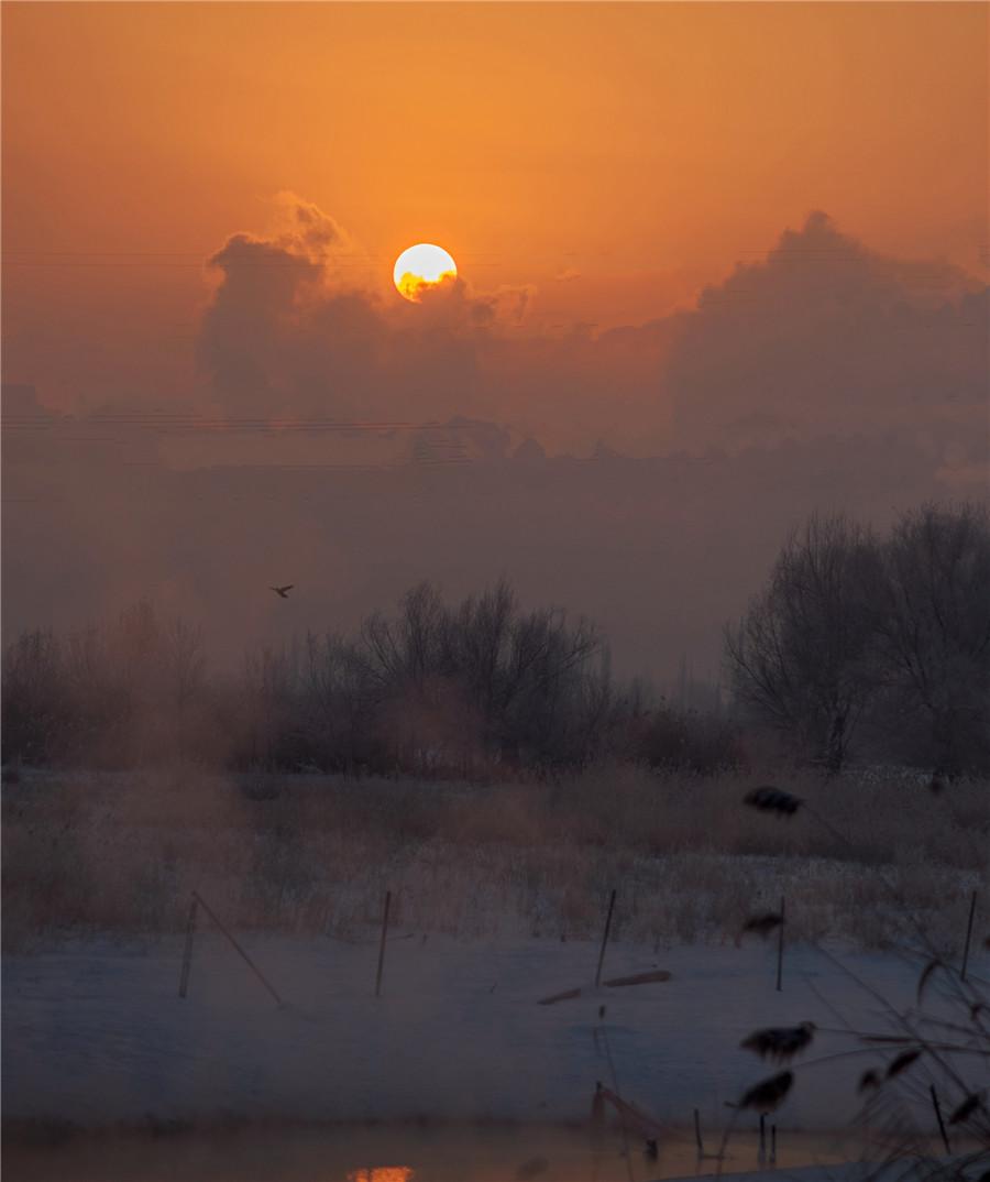 【疆遇风光】石河子北湖湿地冬日风景如画