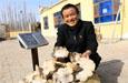 博湖县:小蘑菇撑起村民致富梦