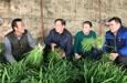 和静县:小韭菜成致富大产业
