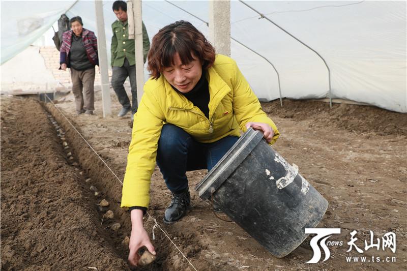和硕县:村民住进大棚助力空气增收土豆闸详解图片