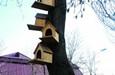 伊宁市:六星街里爱鸟人
