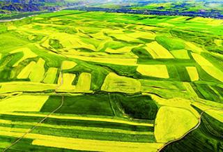 伊犁:生态立州绿色发展