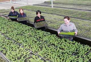 乌恰县设施农业进大棚