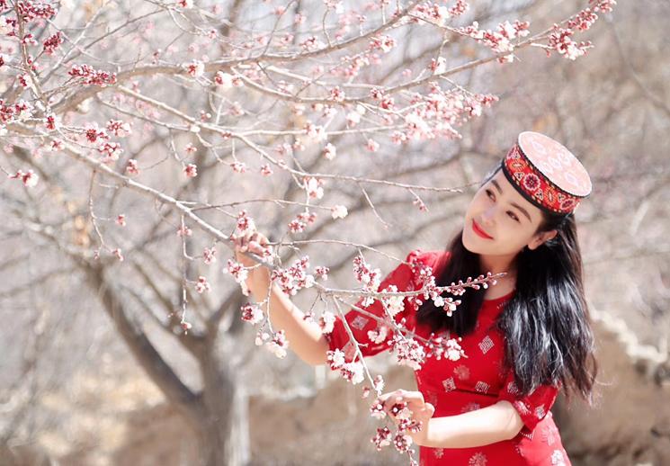 【新疆是个好地方】春来杏花渐次开 幽幽清香扑面来
