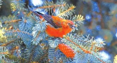 拍鸟网图片_又到候鸟迁徙季,观鸟拍鸟有讲究-新疆新闻-亚心网