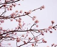 新和县:万紫千红总是春